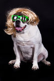 Amerikansk bulldogg på svart bakgrundsexponeringsglashår Arkivfoton