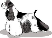 amerikansk cockerspanielspaniel royaltyfri illustrationer