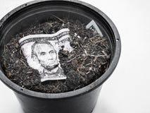 Amerikansk dollar för växt i blomkrukan Arkivbilder