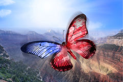 Amerikansk fjäril Arkivbild