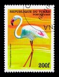 Amerikansk flamingo (Phoenicopterus ruber), fågelserie, circa 199 Arkivfoto