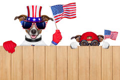 Amerikansk hundkapplöpning Arkivbild