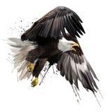 Amerikansk teckning för örnflygvattenfärg Royaltyfri Foto