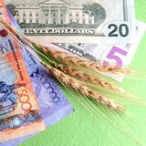Amerikanska dollar, Kasakhstan tenge och veteöron Begreppet av beroendet av priset av korn på valutakursen Expor royaltyfria foton