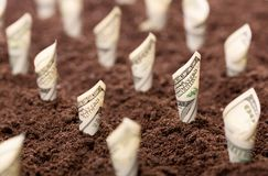 Amerikanska dollar växer från jordningen royaltyfri bild