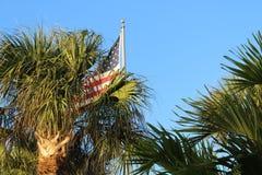 Amerikanska flaggan med palmträd royaltyfria foton
