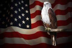 Amerikanska flaggan och skallig örn arkivbild