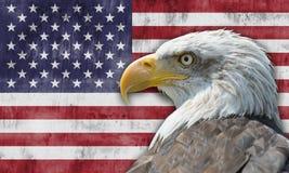 Amerikanska flaggan och skallig örn Arkivfoton