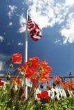 Amerikanska flaggan på vallmofält, USA Memorial Day begrepp arkivbilder