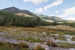 Amerikanska gaffelkanjonvåtmarker Arkivfoton