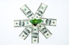 Amerikanska pengar med en grodd Royaltyfri Foto