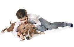 Amerikanska staffordshire terrier och tonårigt Royaltyfri Fotografi