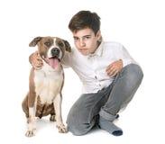 Amerikanska staffordshire terrier och tonårigt Royaltyfria Foton