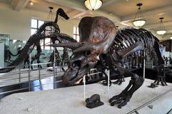 amerikanskt naturligt historiemuseum Arkivbild