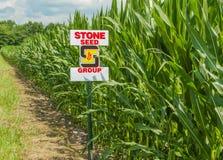 Amerykańska Śródpolna kukurudza Zdjęcia Stock