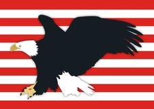 amerykański łysy orzeł Zdjęcia Stock