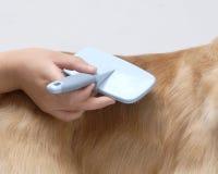 amerykański kuchenki psa zwierzęcia domowego spaniel Obraz Stock