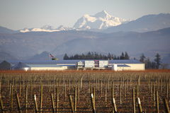 Amerykański zimy jagody gospodarstwo rolne Zdjęcie Stock