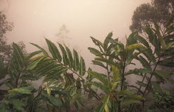 AMERYKA ŁACIŃSKA HONDURAS COPAN Zdjęcie Royalty Free