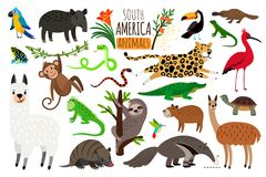 Ameryka Południowa zwierzęta Wektorowy kreskówka guanako, iguana, anteater, ocelot, tapir i armadyl na bielu, Obraz Stock