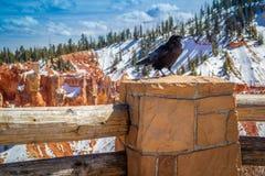 Amerykańska wrona w Bryka jaru parku narodowym, Utah fotografia royalty free