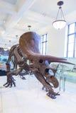 Amerykański muzeum dla Krajowej historii, usa Zdjęcie Royalty Free