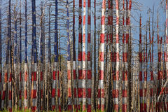 Ameryka Wciąż Piękny zdjęcia stock