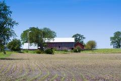 amerykanina gospodarstwo rolne Obraz Stock