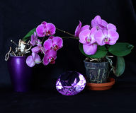 Amethyst crystal and purple orchids Royalty Free Stock Photo