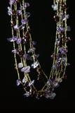 amethyst halsband Royaltyfri Bild
