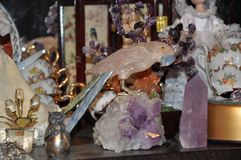 Amethyst parrot royalty free stock photos