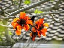 amethyst sunbird Royaltyfri Fotografi