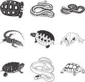 Amfibieen en reptielen royalty-vrije illustratie