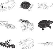 amfibiereptilar Arkivbilder