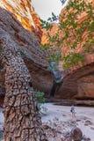 Amfiteatr, Catherdral wąwóz, Purnululu park narodowy Obraz Stock