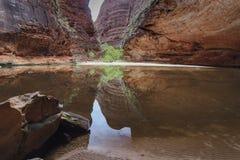 Amfiteatr, Catherdral wąwóz, Purnululu park narodowy Obrazy Stock