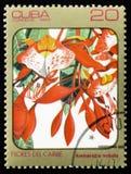 Amherstia nobilis, serie av bilder Arkivbild