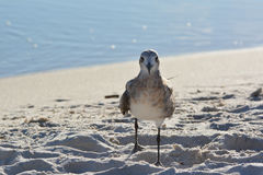 Ami d'oiseau Photo libre de droits