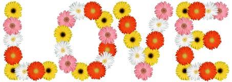Ami dalla natura della molla del fiore dei fiori isolata su bianco Immagine Stock