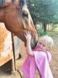 Ami de cheval Image stock