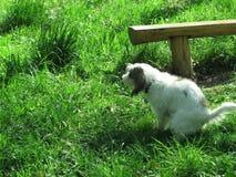 Ami de chien dans la nature Photos libres de droits