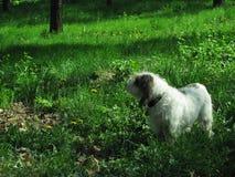 Ami de chien dans la nature Images libres de droits