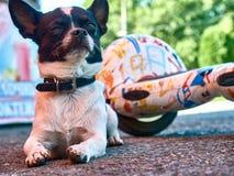 Ami de gardien de gardien d'animal familier de chien Images libres de droits