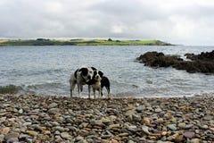 Ami deux sur la plage Photographie stock libre de droits