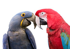 Ami gli uccelli Fotografie Stock Libere da Diritti