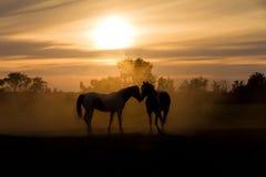 Ami i cavalli Fotografie Stock