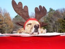 Ami le chien de Noël Photos stock