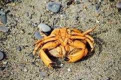 Ami sur la plage Photographie stock libre de droits