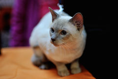 Amiable Cat Royalty Free Stock Photography