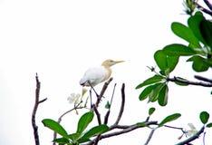 Amiable Bird Royalty Free Stock Image